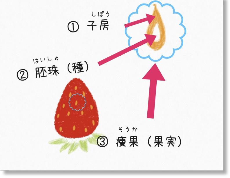 イチゴのつぶつぶ
