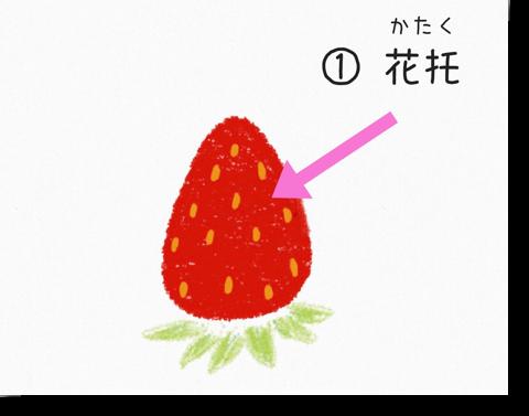 イチゴの花托
