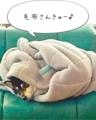 毛布さんきゅー