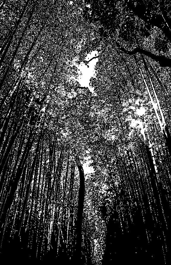 ホラーな竹林