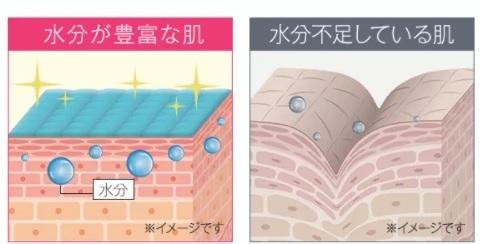 肌と水分の関係の図