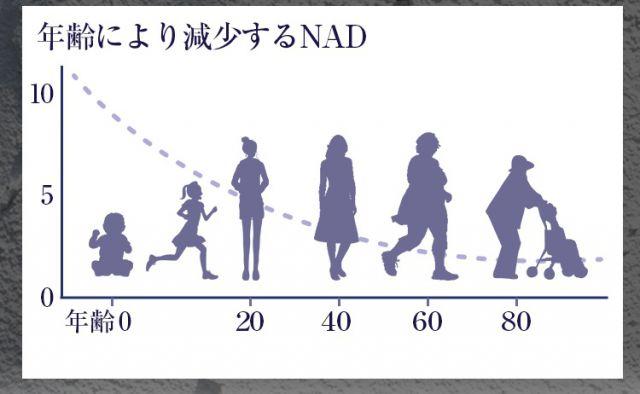 年齢とNADの量の関係
