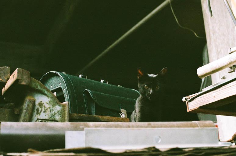 黒猫こんぶ 子猫