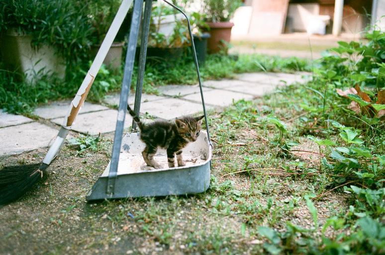 キジトラの子猫