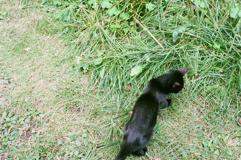 子猫の黒猫こんぶ