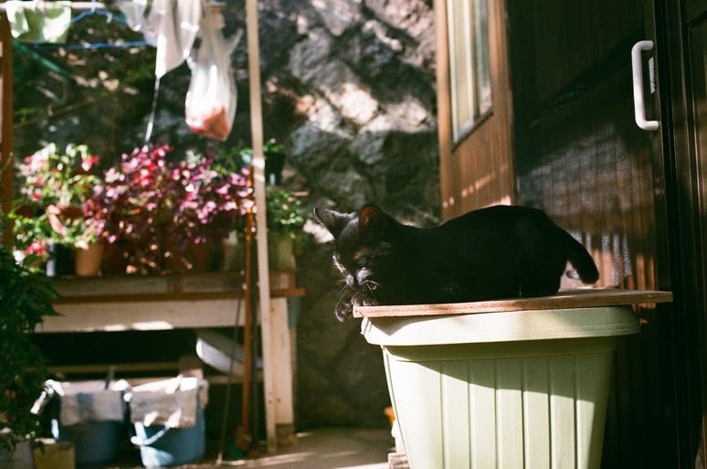 黒猫こんぶのお家