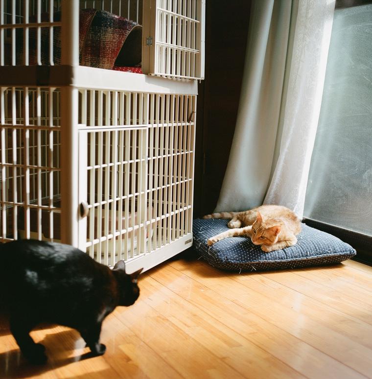 黒猫こんぶと茶トラおかか