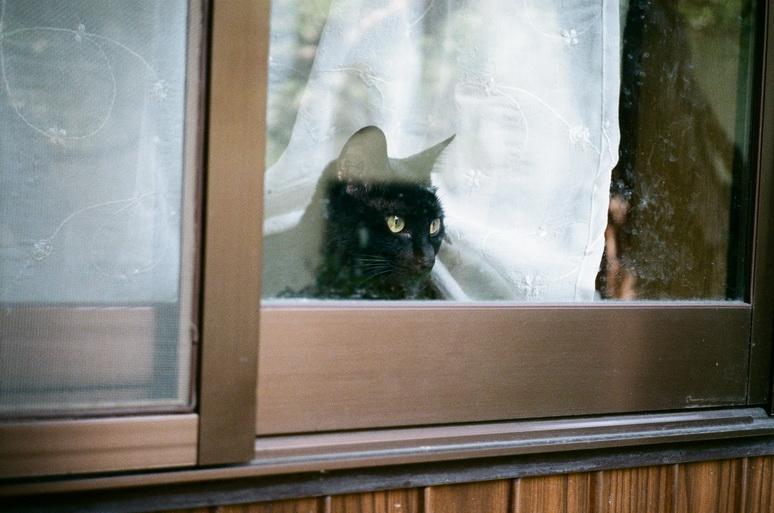 窓から外を覗く黒猫こんぶ