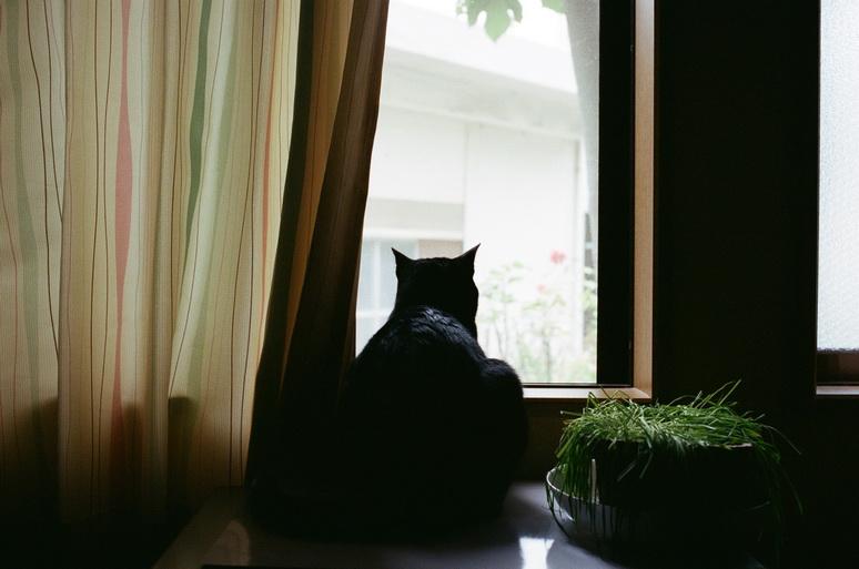 黒猫こんぶと猫草