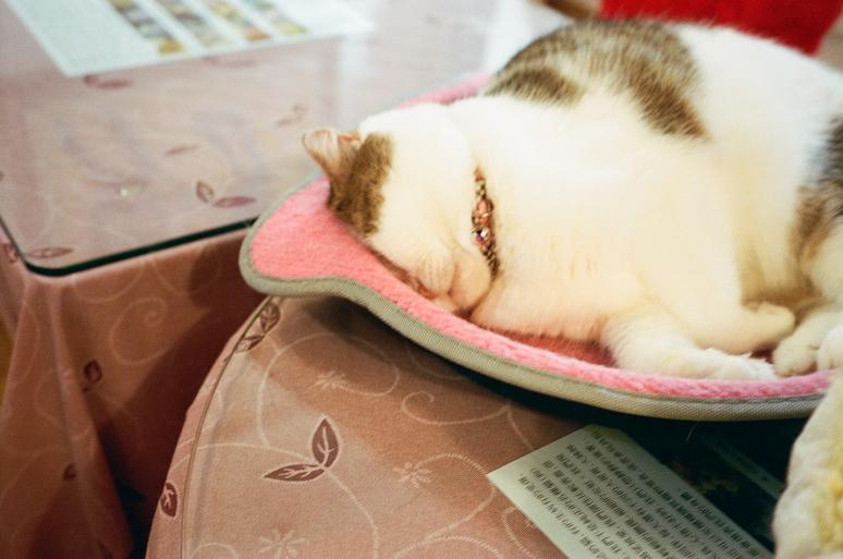 台湾の猫カフェ猫花園の猫