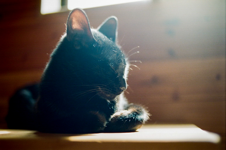お昼寝中の黒猫