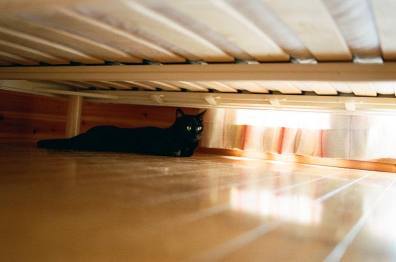 ベッドの下にいる黒猫