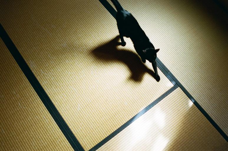 畳の上を歩く黒猫