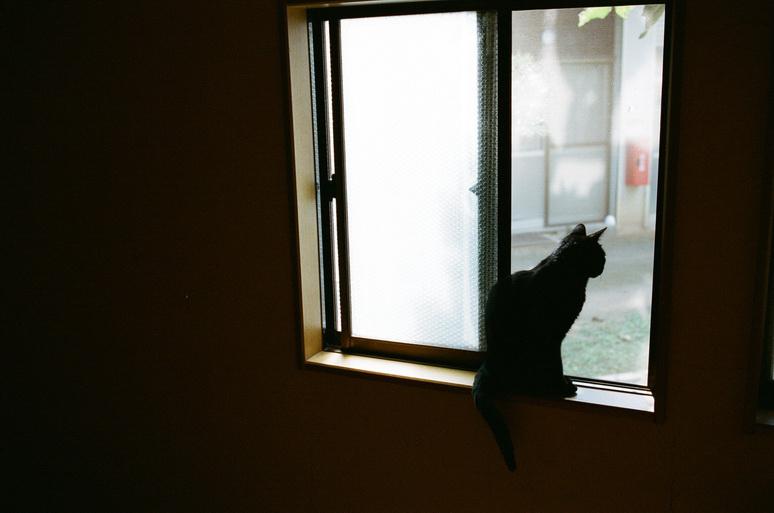 窓から外を眺める黒猫こんぶ