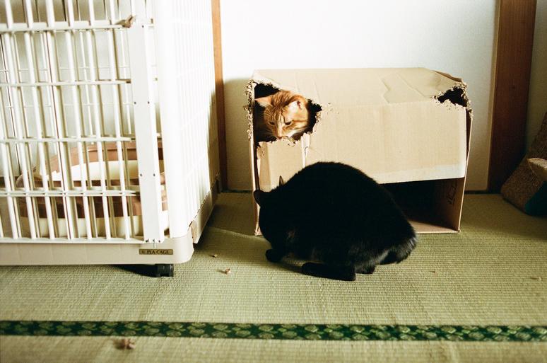 段ボール箱と猫