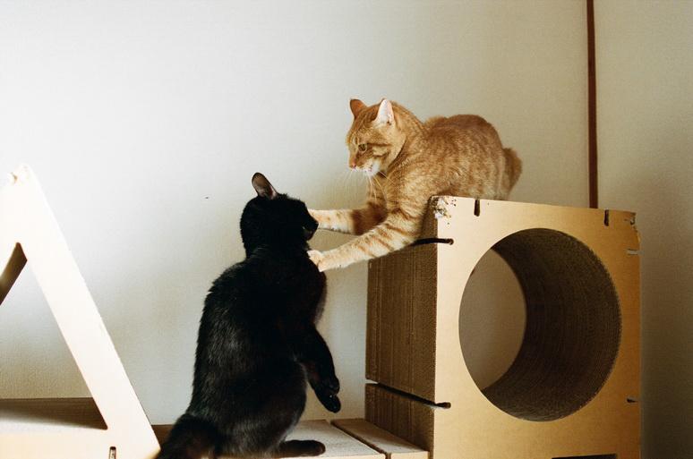 ケンカをする茶トラ猫と黒猫