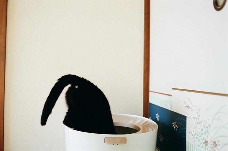トイレに入ろうとしている黒猫