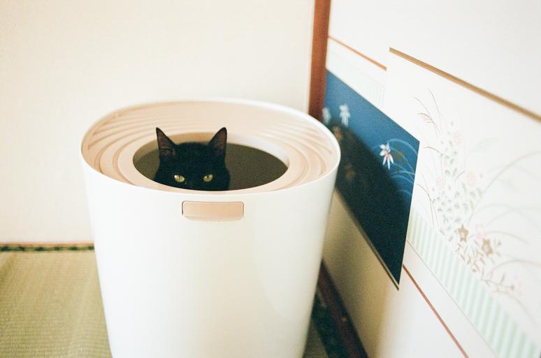 トイレをしている黒猫