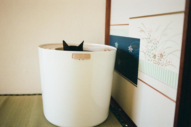 トイレに入っている黒猫