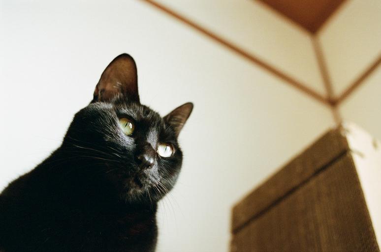 黒猫こんぶ