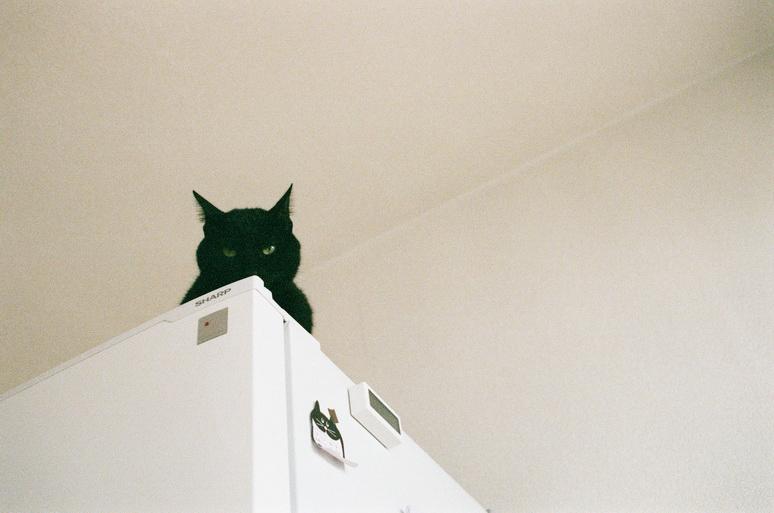 冷蔵庫の上にいる黒猫