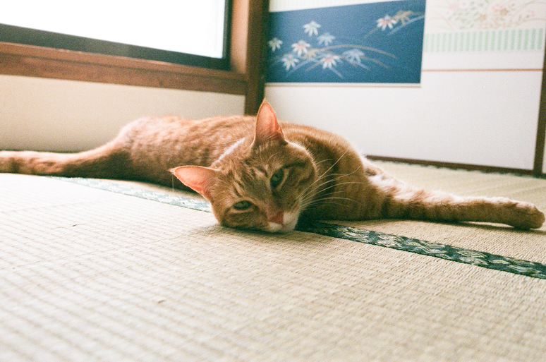 畳に寝そべる茶トラ猫