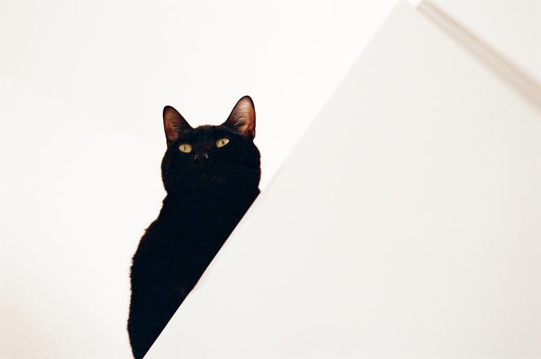 冷蔵庫の上にいる猫