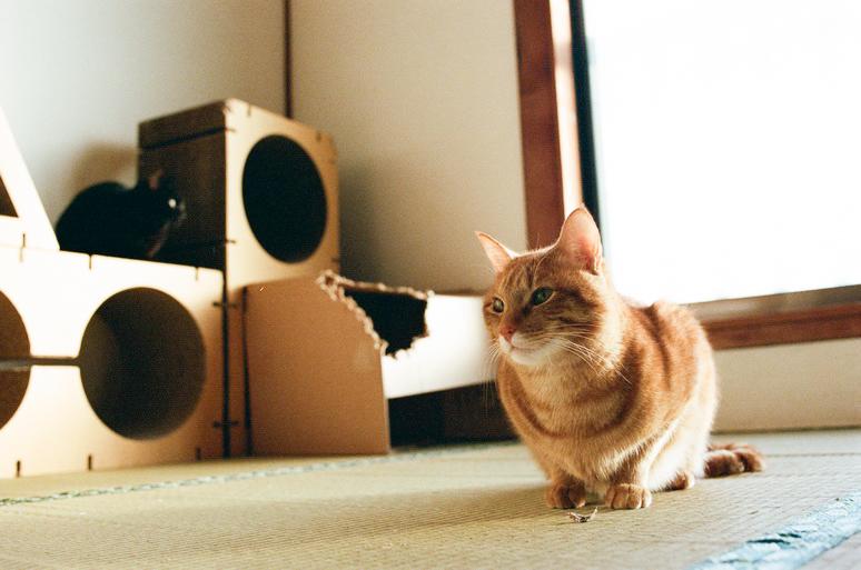 ごはん待ちの黒猫と茶トラ猫