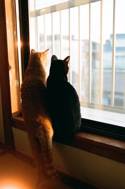 2階から外を眺める黒猫と茶トラ猫