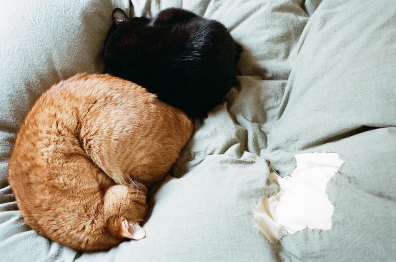 布団の上で眠るおかかとこんぶ