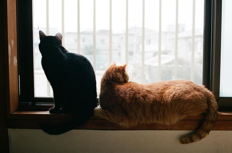 外を眺める黒猫と茶トラ猫