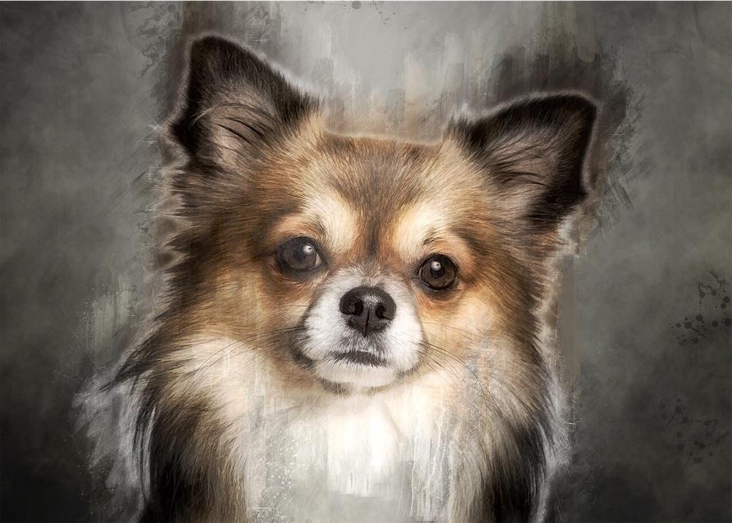 f:id:riro-chihuahua:20190101095815j:image