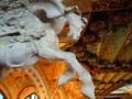 カタルーニャ音楽堂の馬