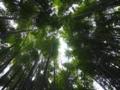 鎌倉 報国寺の竹林