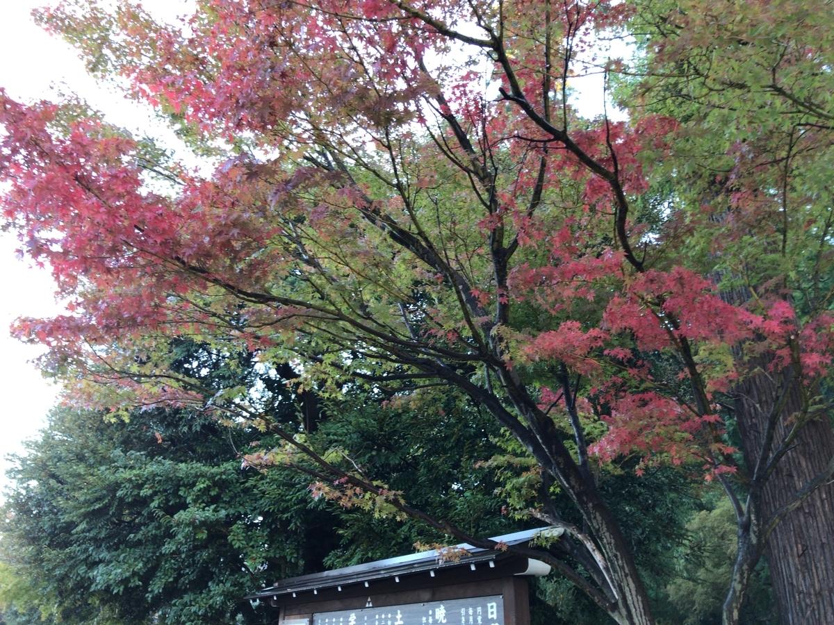 円覚寺の紅葉20191112-2