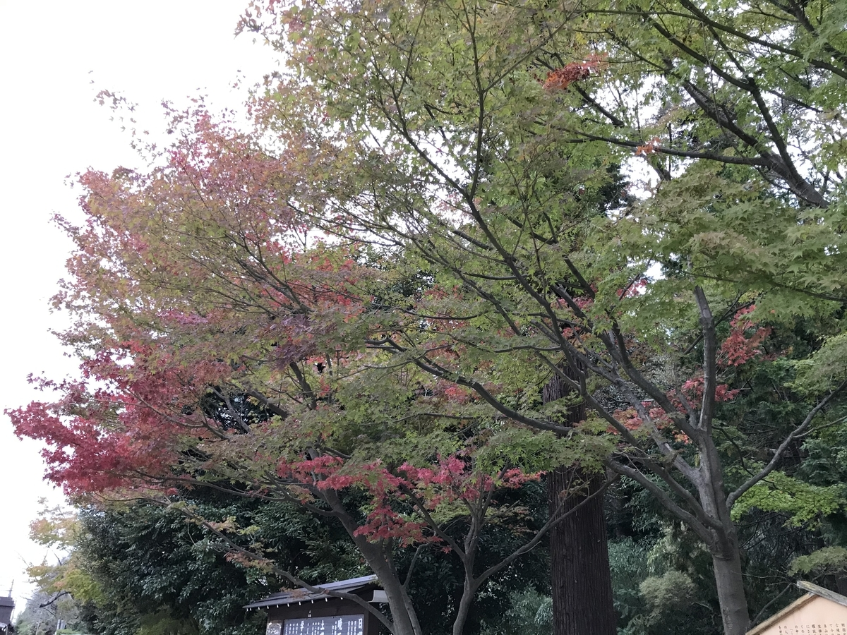 鎌倉円覚寺2019年の紅葉20191113-2