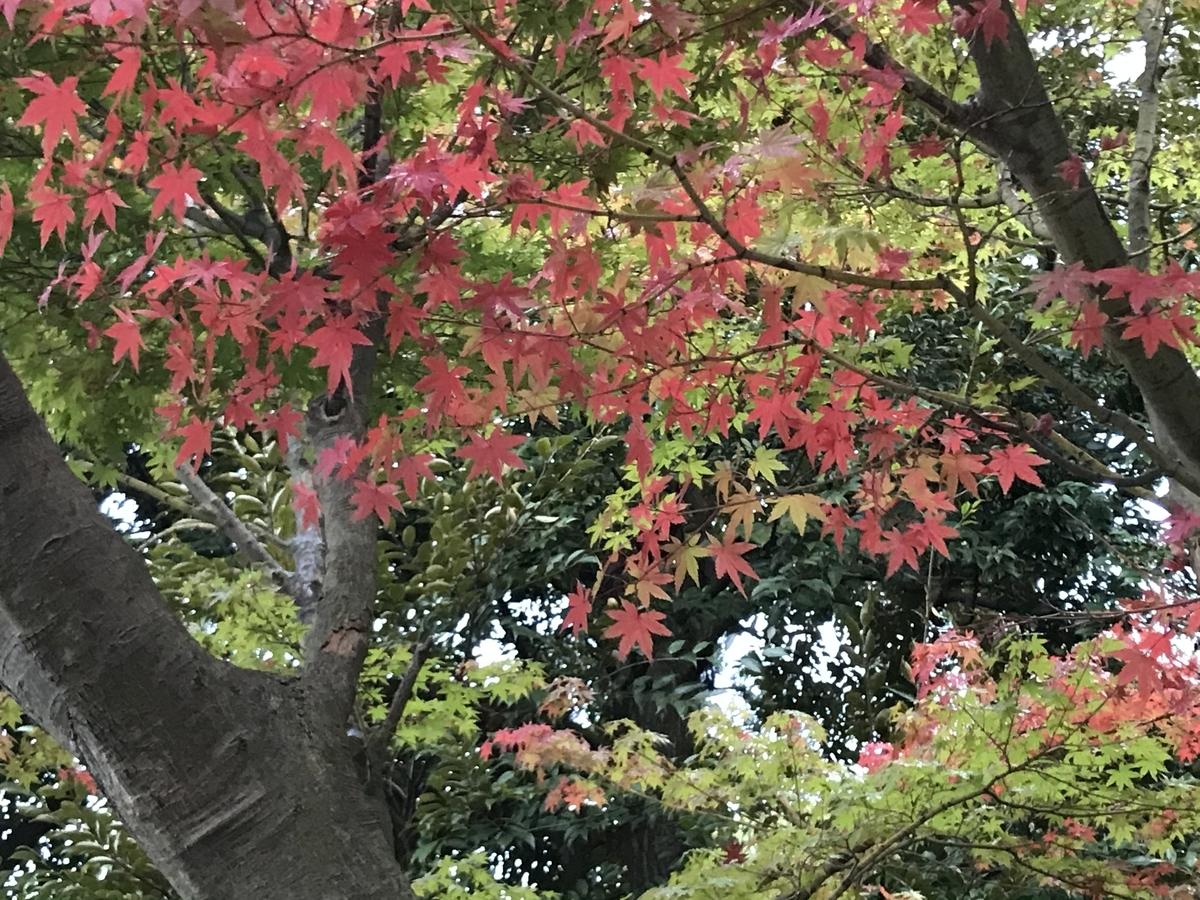 2019年鎌倉円覚寺紅葉20191114-1