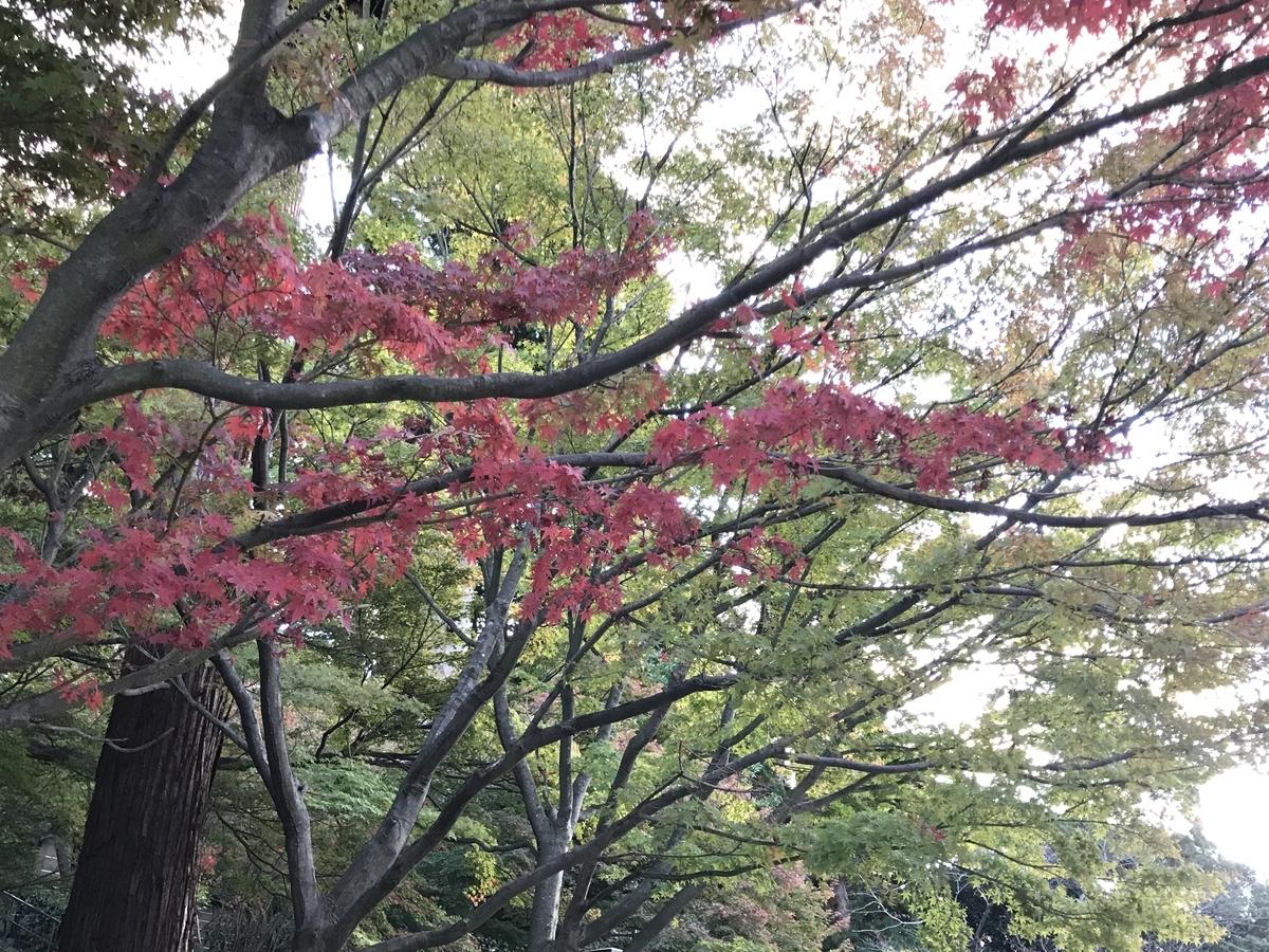 2019年鎌倉円覚寺の紅葉20191115-1