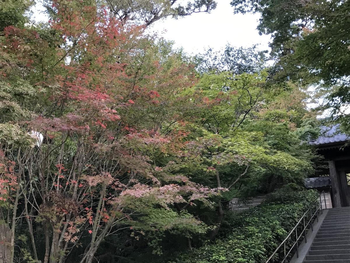 2019年鎌倉円覚寺の紅葉20191115-4