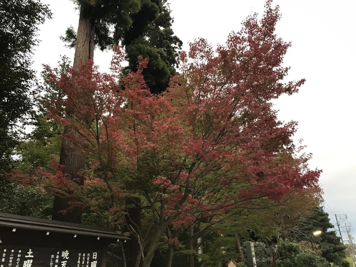 2019年鎌倉円覚寺の紅葉20191118-1