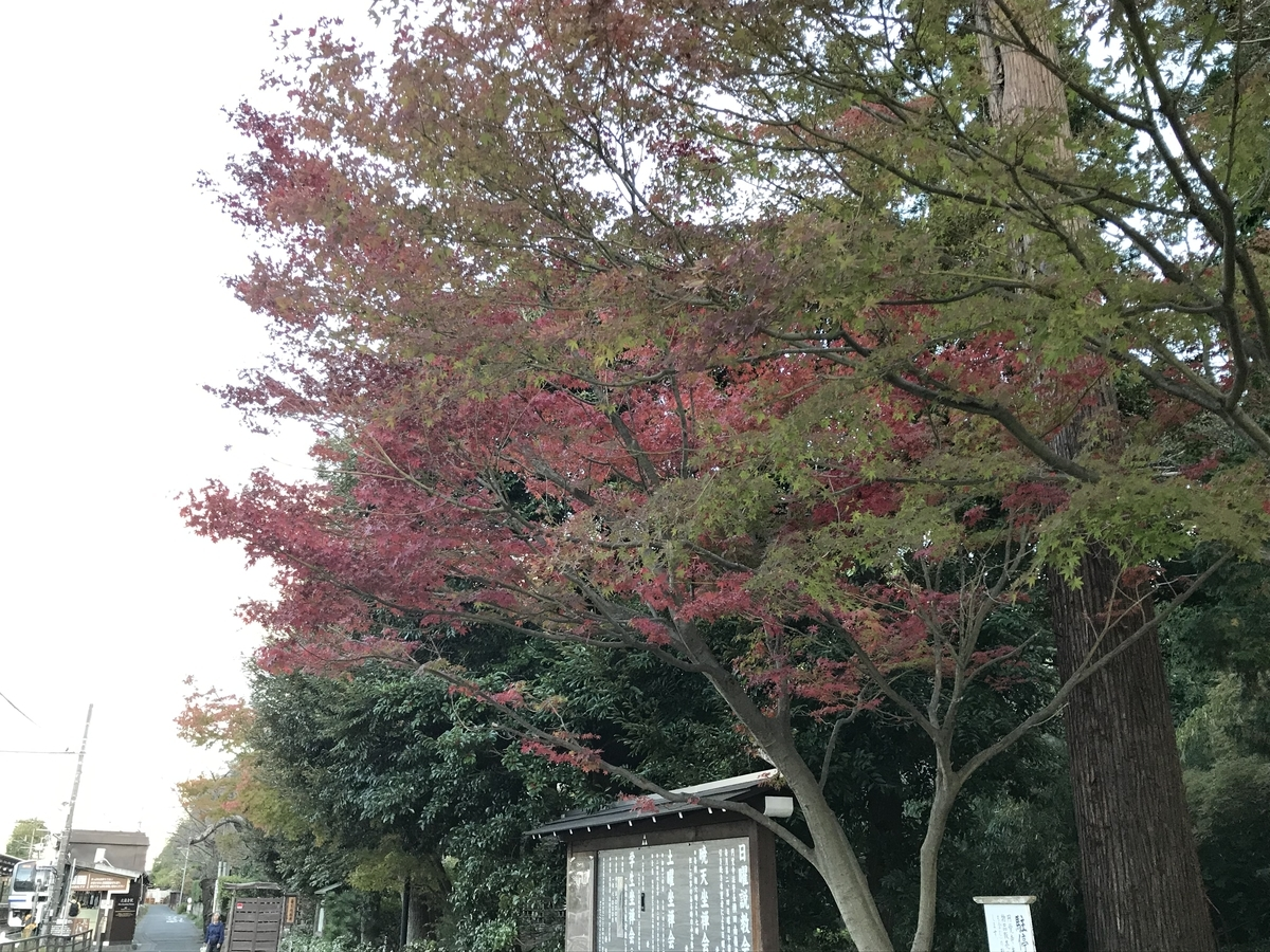 鎌倉の紅葉円覚寺20191121-1