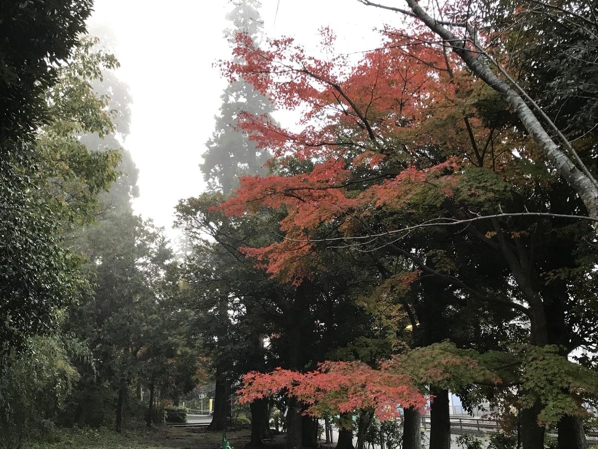 鎌倉紅葉円覚寺20191125-2