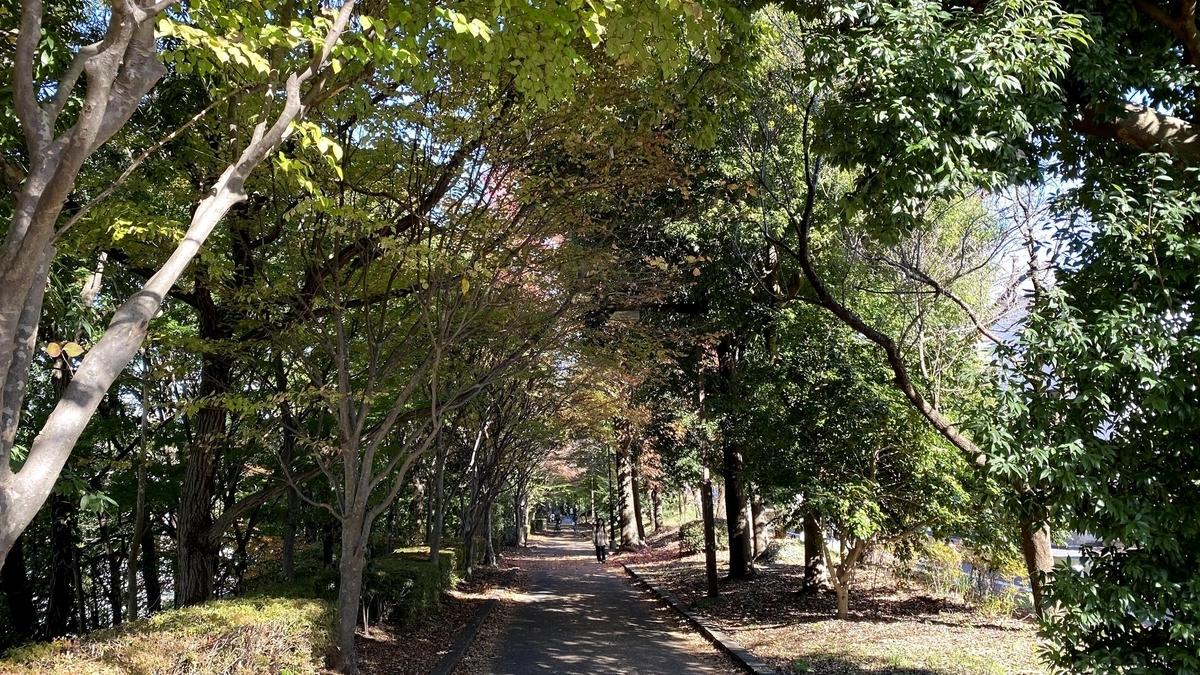 南大沢駅からWILD-1に行くまでに通る遊歩道