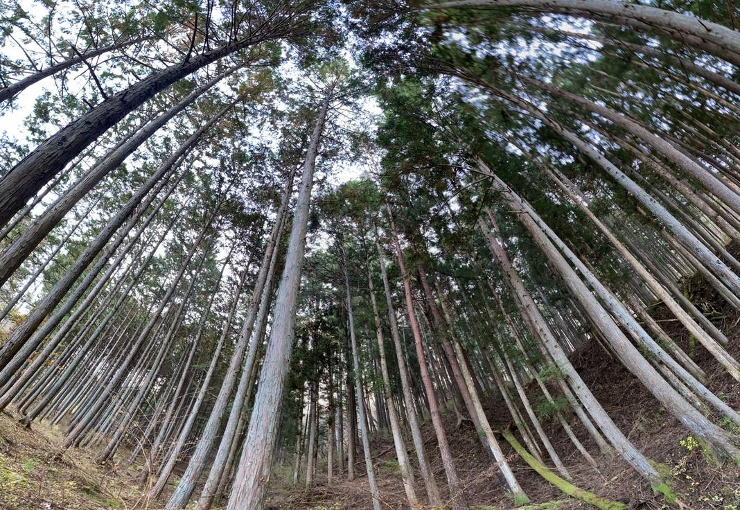 キャンプ場入り口付近の林