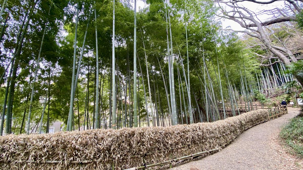 竹林が続く多摩自然遊歩道