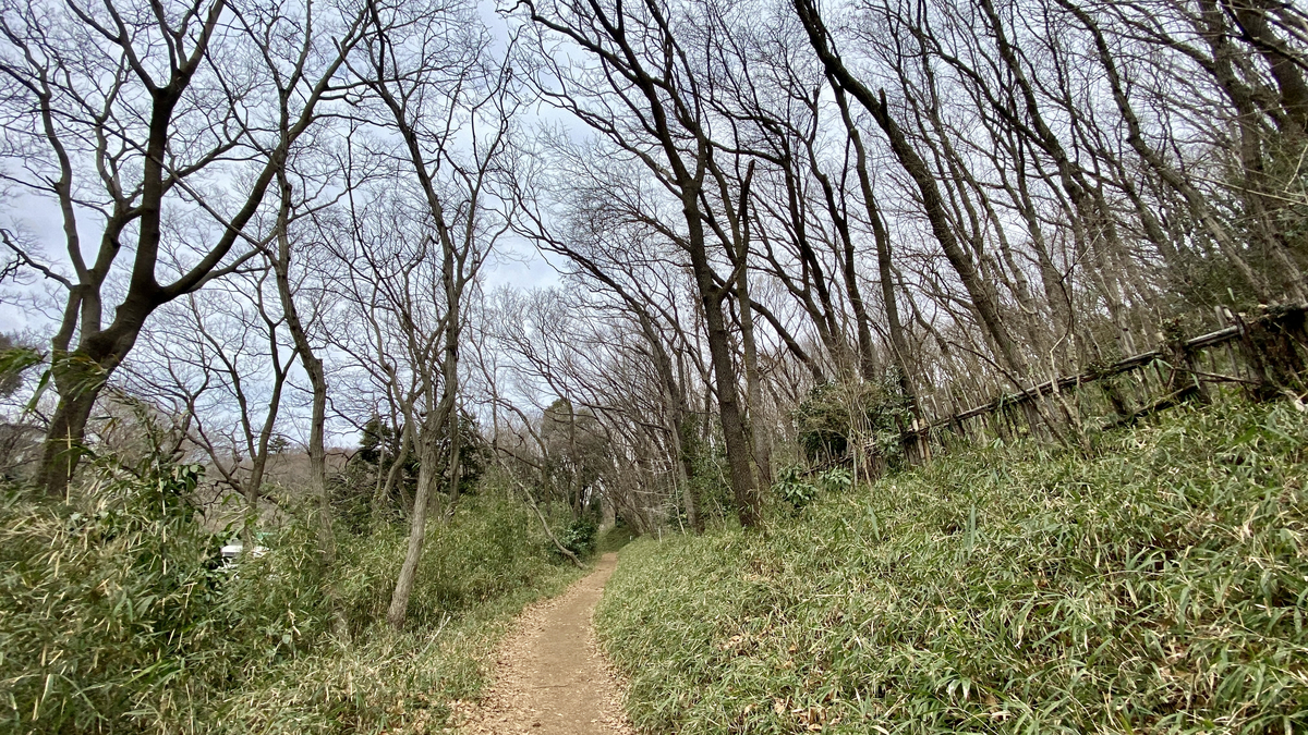 森の中を歩いてる!って感じの雰囲気