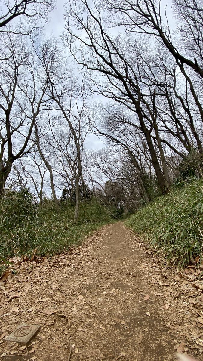 野山を歩いている感じになれる遊歩道の様子
