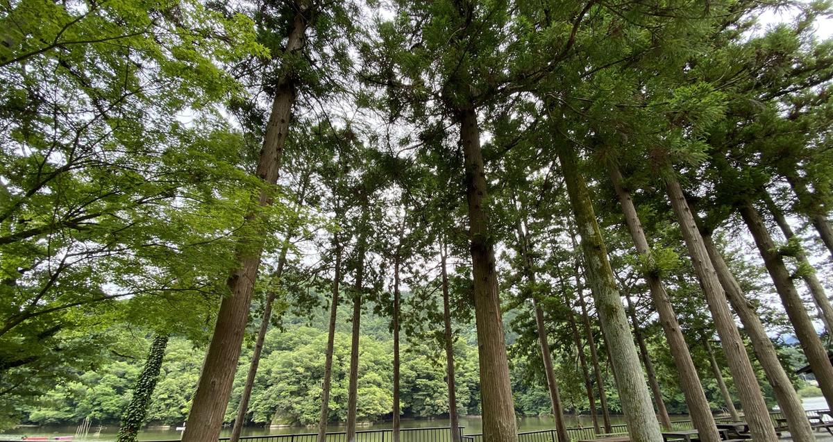 高台サイトを囲む木々