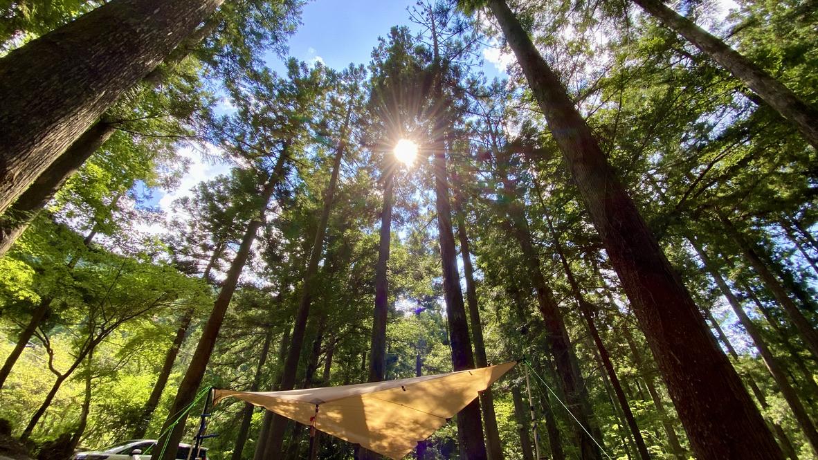 林間サイト最高