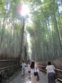 [京都][嵐山][竹林]竹林の道